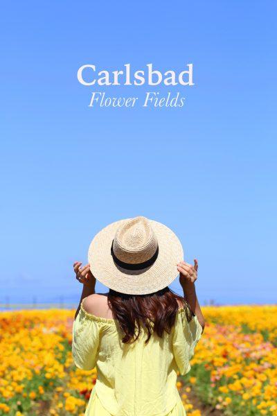 Style:  Carlsbad Flower Fields